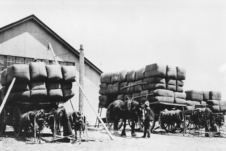 Loading-the-Wool